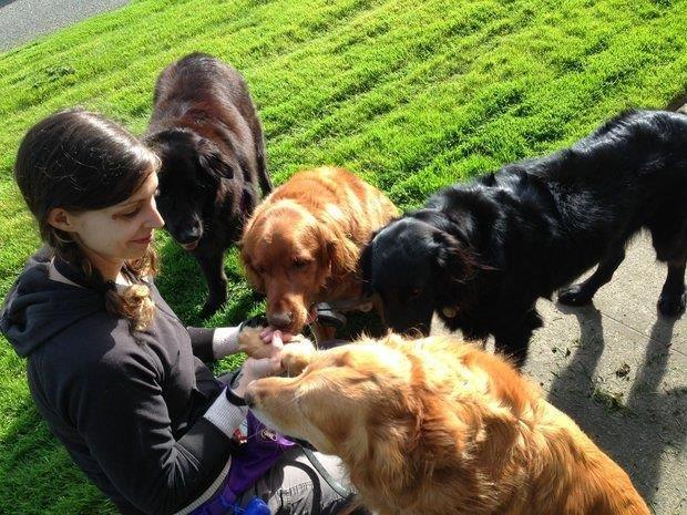 Pet Sitting - A Rewarding Career